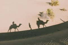 Dromedarschatten in der Wüste von Thar stockfotos