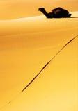 Dromedary. ( Camelus Dromedarius ) at Erg Chebi, Sahara Desert, Morocco, Africa Royalty Free Stock Photography