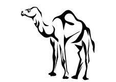 Dromedary Royalty Free Stock Photos