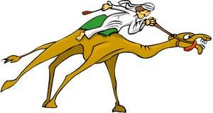 Dromedary. Arabian dromedary rider on high speed over the sands of the sahara desert Royalty Free Stock Images