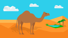 Dromedary Camel in Desert Vector in Flat Design Royalty Free Stock Photography