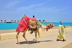 DROMEDARY NEXT TO THE BEACH IN EGYPT