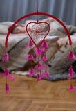Dromen over liefde royalty-vrije stock afbeeldingen