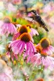 Dromerig beeld van het voeden van de Kolibrie Royalty-vrije Stock Afbeelding