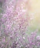 Dromerig roze bloemengebied Royalty-vrije Stock Afbeeldingen