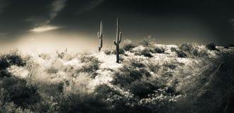Dromerig Woestijnlandschap stock afbeeldingen