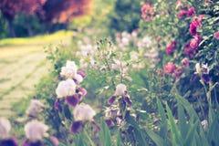 Dromerige bloemweg Royalty-vrije Stock Fotografie