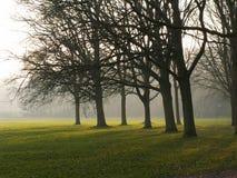 Dromerige bomen Stock Foto's