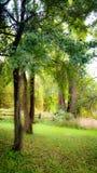 Dromerige bomen Royalty-vrije Stock Foto's