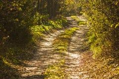 Dromerige boslandweg in de herfstlandschap Royalty-vrije Stock Afbeeldingen