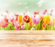 Dromerige de lenteachtergrond van kleurrijke tulpen Stock Foto's