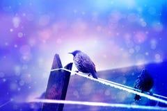 Dromerige de winterscène twee het starling vogelssittin op draad met bokehlichten Royalty-vrije Stock Foto