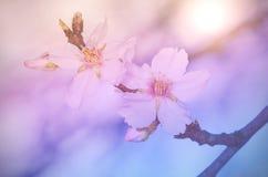 Dromerige foto van kersenbloem Stock Foto's