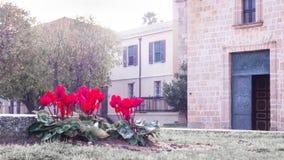 Dromerige rode cyclaam Royalty-vrije Stock Afbeeldingen