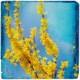 Dromerige springflowersachtergrond stock foto's