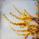 Dromerige springflowersachtergrond royalty-vrije stock foto