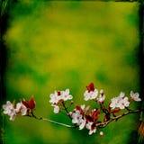 Dromerige springflowersachtergrond stock foto