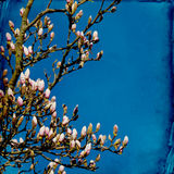 Dromerige springflowersachtergrond royalty-vrije stock foto's