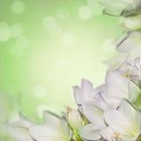 Dromerige springflowersachtergrond stock fotografie