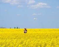 Dron fliegt nach dem Mädchen Schießen mit einem Brummen auf dem Gebiet Ein Mädchen in einem schwarzen Kleid auf einem Gebiet der  Lizenzfreies Stockbild