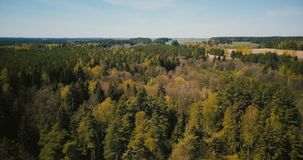 Drone aerial shot of early springtime wild forest. 4K flyover view of sunny mixed forest trees, small river countryside. Drone aerial shot of early springtime stock video footage