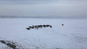 Aerial View of Horse Herd and Shepherds in Snowed Valley in Kayseri. Cappadocia