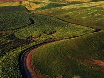 Drone aerial view with rural road and sunflower field royalty free stock image