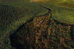 Drone aerial view with sunflower field royalty free stock photos