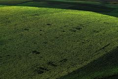 Drone aerial view with sunflower field stock image