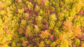 Drone aerial view of woods during the autumn season with warm colors. Drone aerial view of woods during the autumn season with warm colours Royalty Free Stock Photos
