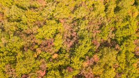 Drone aerial view of woods during the autumn season with warm colors. Drone aerial view of woods during the autumn season with warm colours Royalty Free Stock Image