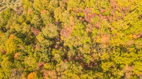 Drone aerial view of woods during the autumn season with warm colors. Drone aerial view of woods during the autumn season with warm colours Stock Photo