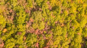 Drone aerial view of woods during the autumn season with warm colors. Drone aerial view of woods during the autumn season with warm colours Stock Photos