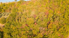 Drone aerial view of woods during the autumn season with warm colors. Drone aerial view of woods during the autumn season with warm colours Royalty Free Stock Images
