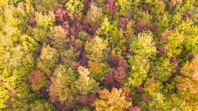 Drone aerial view of woods during the autumn season with warm colors. Drone aerial view of woods during the autumn season with warm colours Stock Images