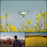 Drone in agricultural production collage. Collage of drone implementation in agricultural production. Technology innovation increasing farming productivity royalty free stock images