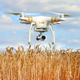 Drone in agriculture. Drone quadrocopter Dji Phantom 3 Professional with camera. Farmer use drone for inspect of crop on wheat fields. Modern technology in royalty free stock photos
