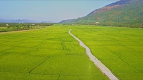 Drone Approaches Road among Rice Fields against Sky. Drone approaches ground road with scooter among green rice fields near small village against blue sky and stock video footage