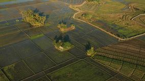 Drone or bird eye view of Bali rice field stock footage