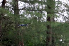 Drone Camera flying in the sky while the rain forests background royalty free stock images