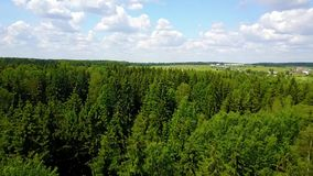 Drone flies over the pine forest stock footage