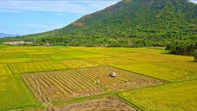 Drone flies over tractor reaping harvest on rice field stock footage
