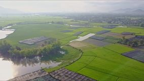 Drone flies from road to rice fields trees lakes river. Drone flies from traffic road to green rice fields trees lake river against distant mountains and blue stock video