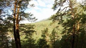 Drone flies between the trees. 4K stock footage