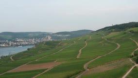 Drone flight in German vineyards. stock video footage