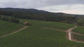 Drone flight in German vineyards. stock footage