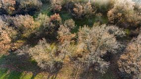 Forest from aobve in the automn. A drone flight over a forest in the autumn stock image