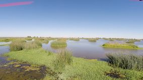 Drone Flight Over Wetlands With Blue Sky. Drone Flight Over Water And Reeds With Clear Blue Sky Davis California stock footage