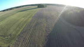 Drone fly height over summer end evening farmland fields, aerial view stock video footage