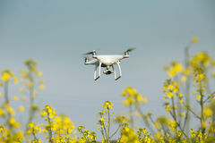 Drone flying above rapeseed ield Royalty Free Stock Images